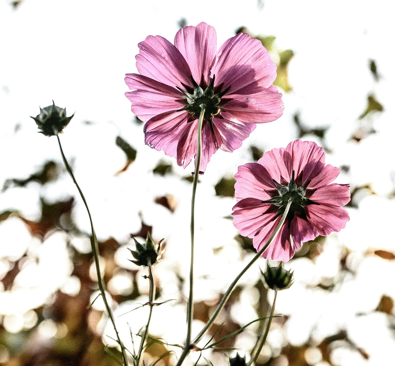 flowers-209144_1280